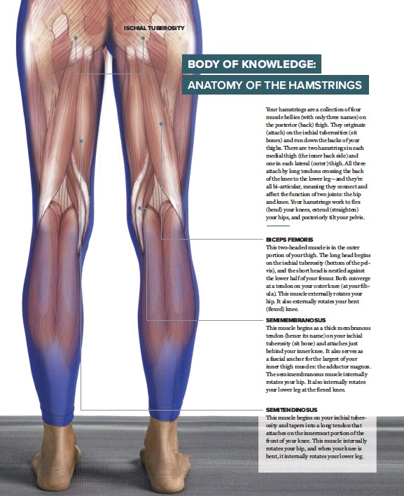 Pressreader Yoga Journal 2017 09 01 Body Of Knowledge Anatomy