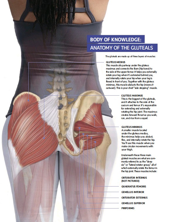 Pressreader Yoga Journal 2017 06 01 Body Of Knowledge Anatomy
