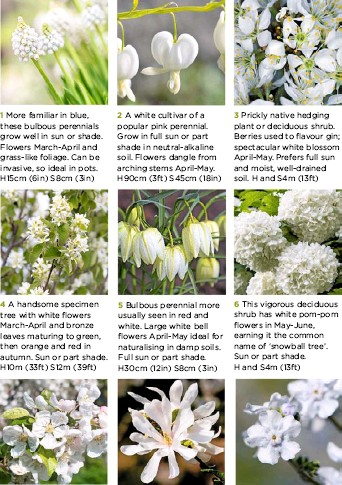 Pressreader garden answers uk 2017 03 01 name that white h3m 10ft s4m 12ft 9 herbaceous perennial useful for groundcover in shady spots with moist soil flowers march april on slender stems above heart shaped mightylinksfo